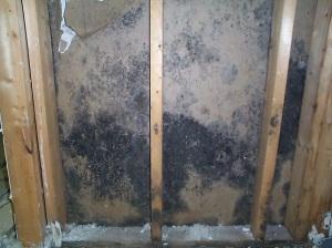mold - behind walls