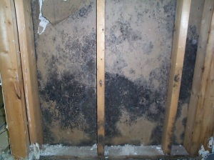 Are You Allergic To Mold Cleanfirst Restoration