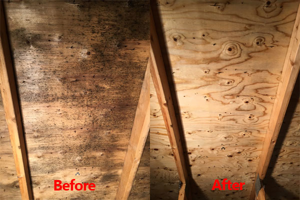 Before and after attic mold
