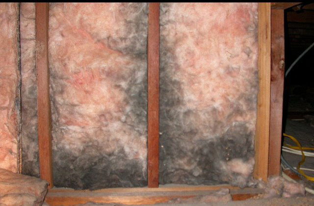 Mold on insulation