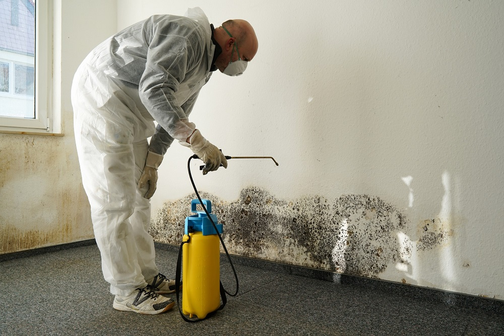 prevent mold in basement